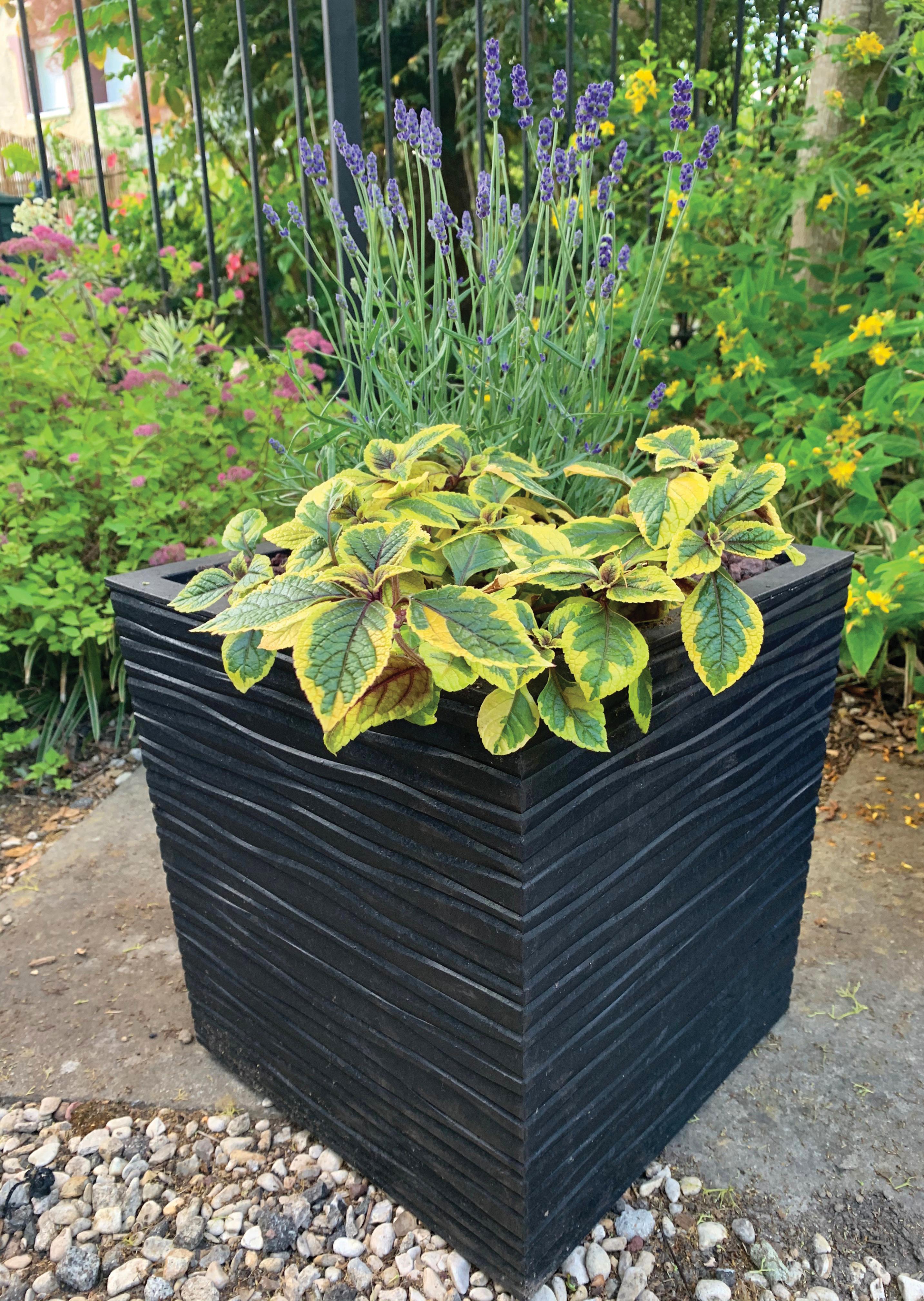 Ribimex : des contenants design pour fleurs, plantes et arbustes
